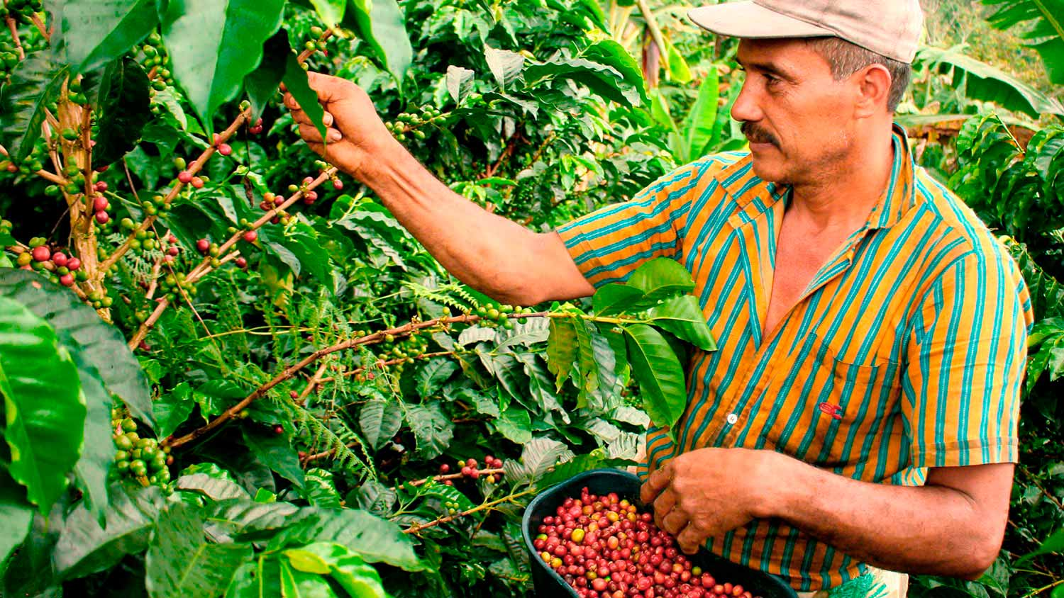 opt-coffee-tour-colombia-farmer