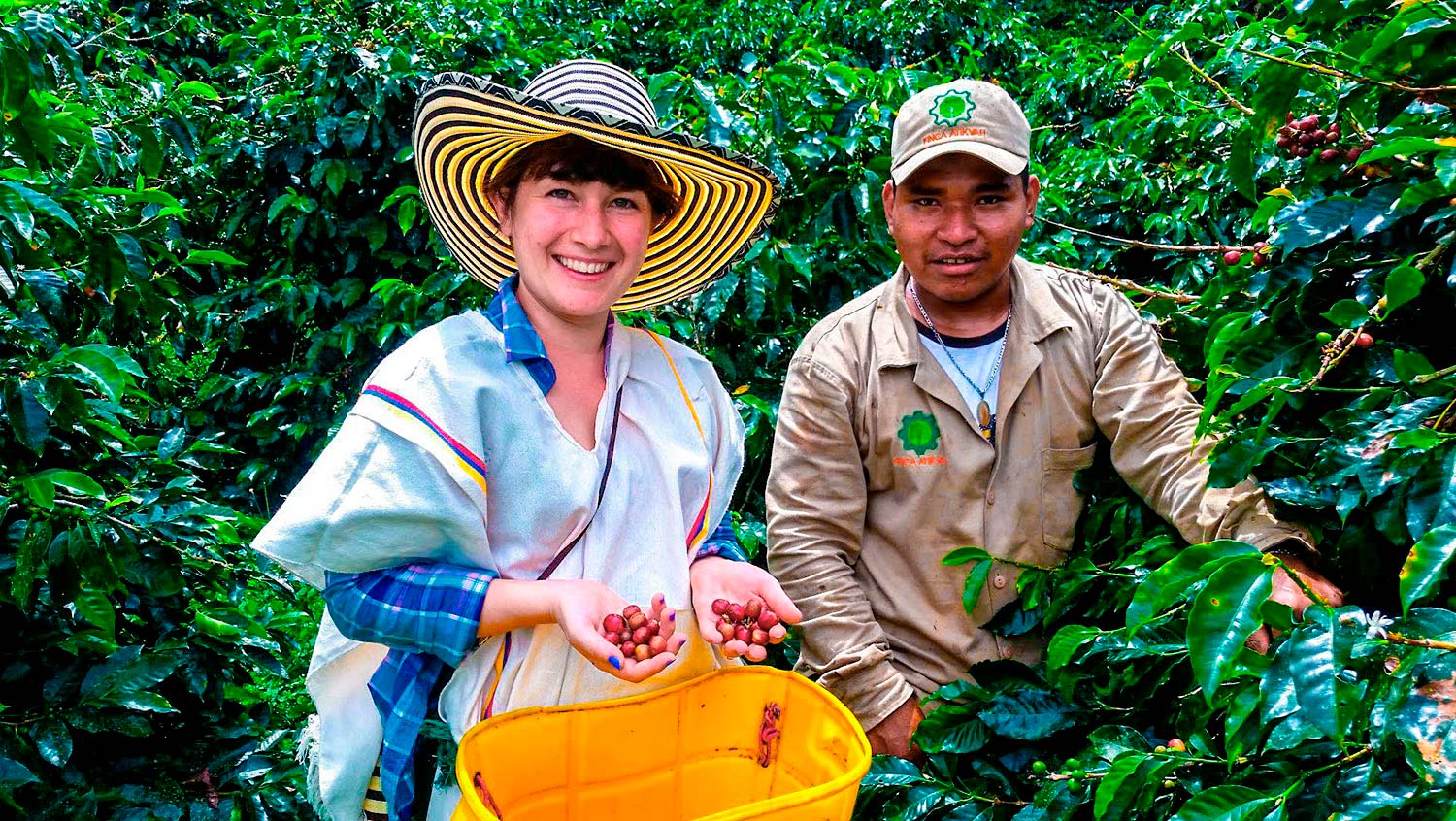 opt-coffee-tour-colombia-harvest