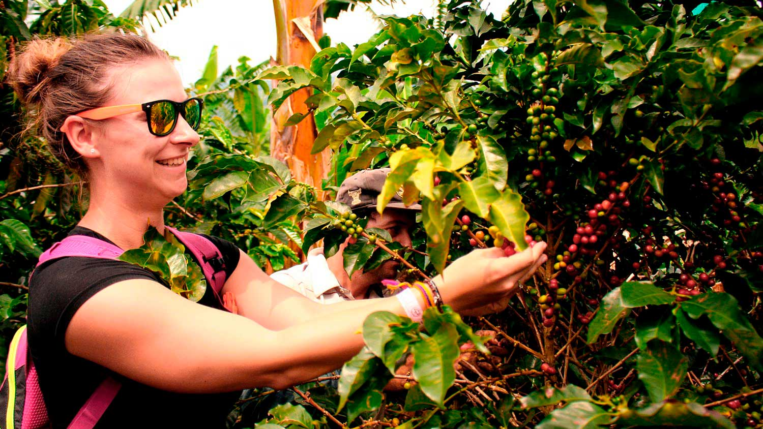 opt-coffee-tour-colombia-harvesting